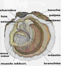 anatomie_HP